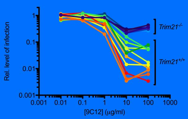 Graph of adenovirus neutralization in normal fibroblasts or fibroblasts that lack Trim21